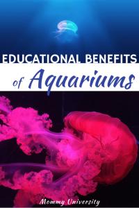 Educational Benefits of Aquariums