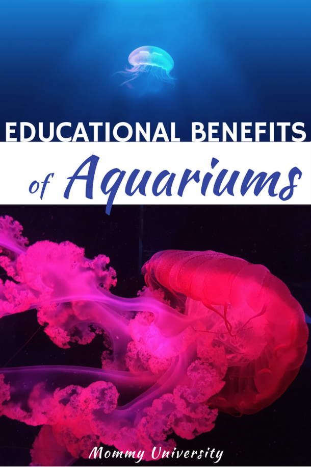 Educational Benefits of Aquariums