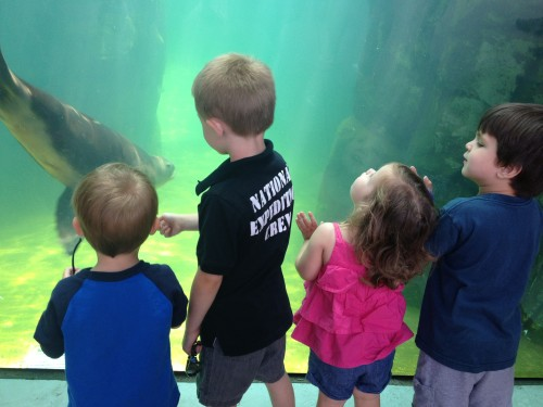 Visiting a zoo allows for exploration and discovery while sparking curiosity and creativity!
