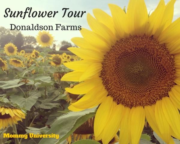Sunflower Tour