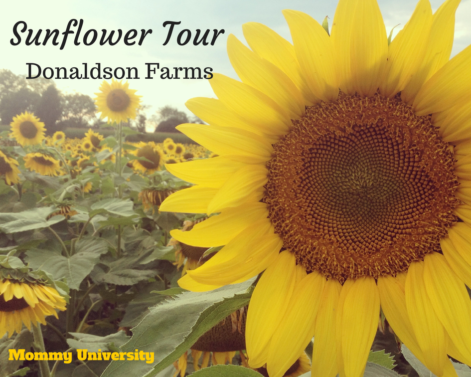 Sunflower Tour