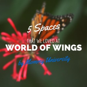 5 Spaces of WOW