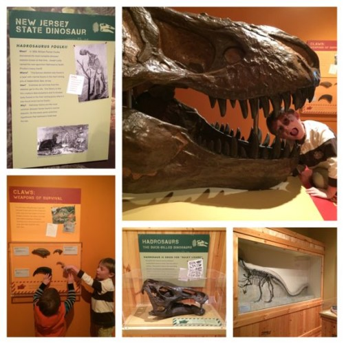 Morris Museum Dinosaur