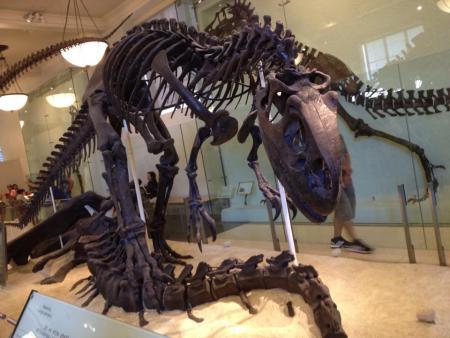 AMNH Dinosaurs