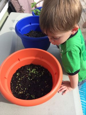 When gardening, kids have to patiently wait for their seeds to grow!
