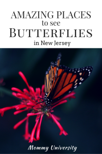 NJ Butterflies