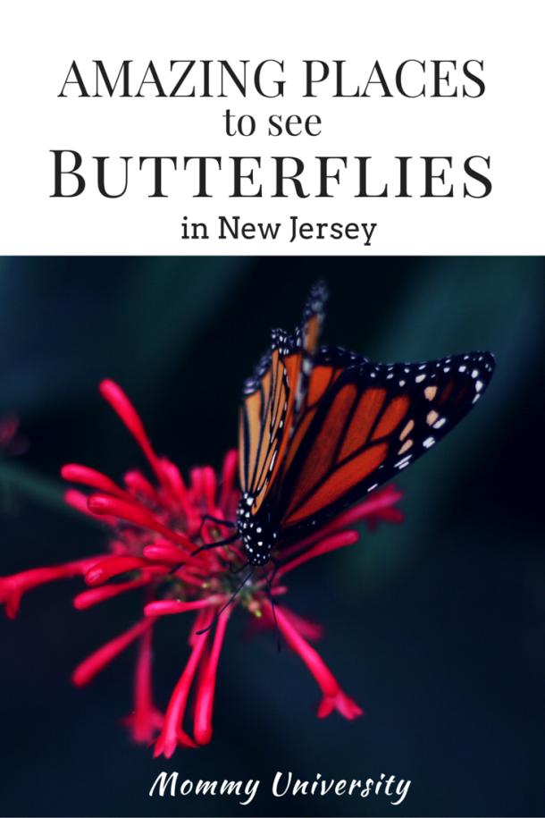 NJ Butterflies