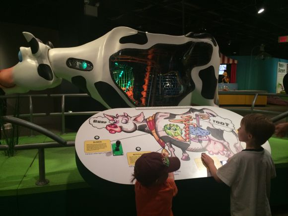 Grossology Cow