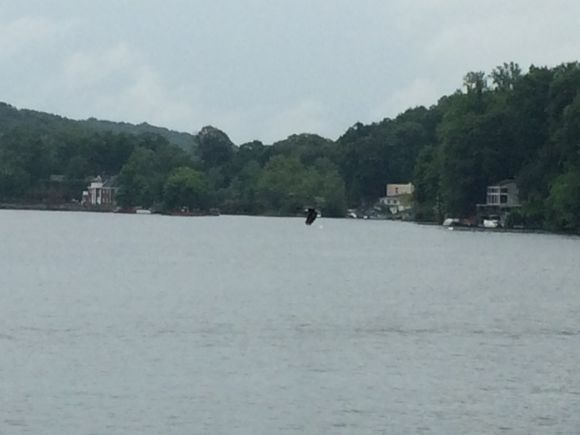 What better day to see a Bald Eagle than on the 4th of July?