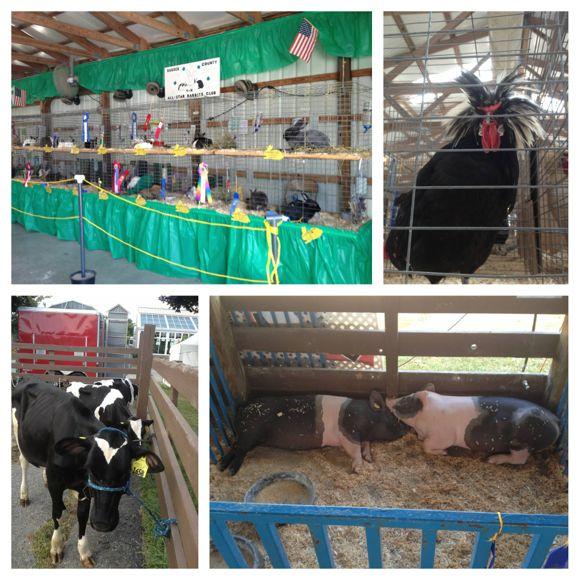 NJ State Fair Livestock