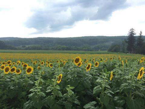 Brodhecker Farms