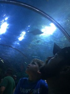 We were in awe when we looked up and saw all the amazing sea creatures!