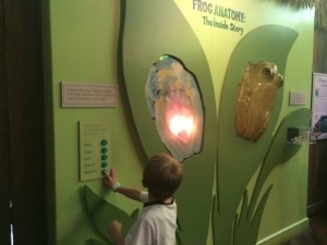 Audubon Frog Anatomy Exhibit