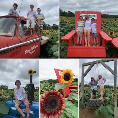 Stony Hill Farms sunflowers