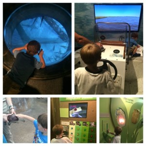 I love all the interactive learning opportunities that guests can experience at the Audubon Aquarium!