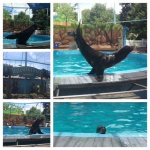 Hersheypark Aquatic Show