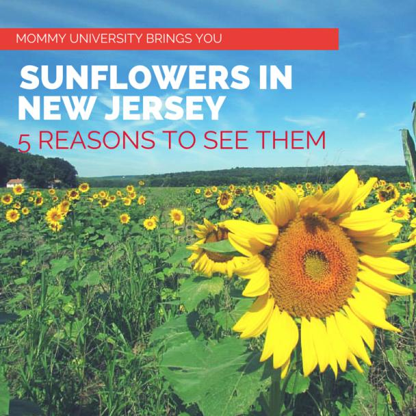 5 Reasons to See Sunflowers