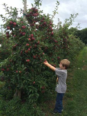 Apple picking has so many developmental and educational benefits!