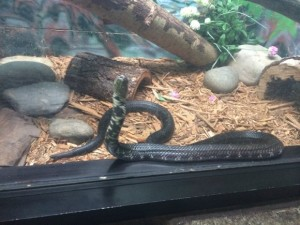 Cape May County Zoo Snake