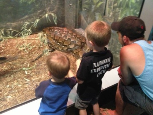 My kids love looking at the snakes at the Turtle Back Zoo!