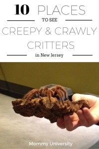 10 Places to See Creepy and Crawly Critters