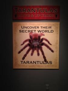Tarantulas