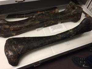 Academy Real Dinosaur Bones