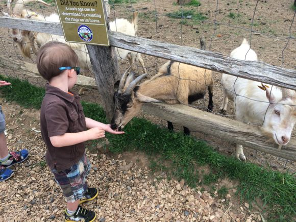 Feeding Animals at Alstede Farms