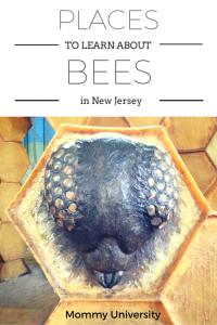 Bees in NJ