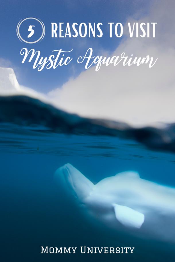 5 Reasons to Visit Mystic Aquarium