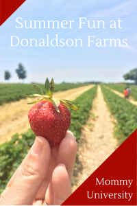 Summer Fun at Donaldson Farms