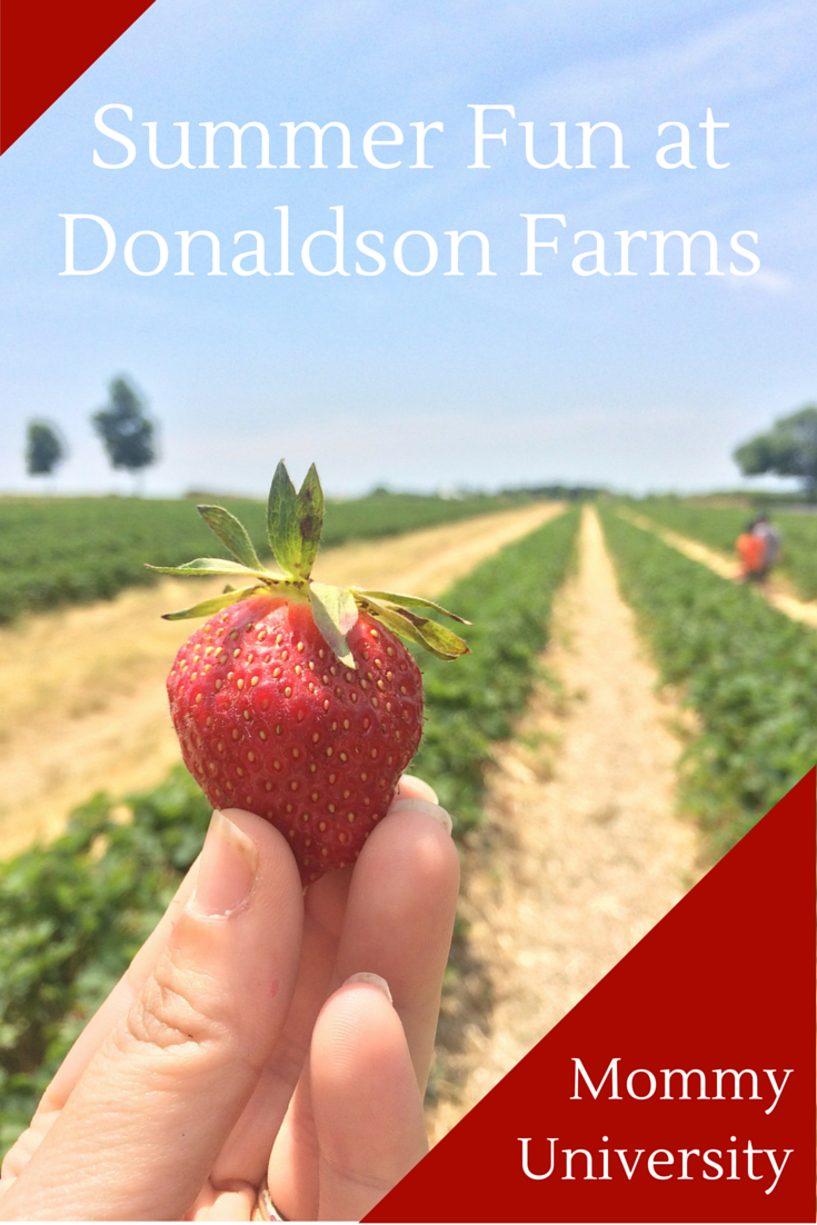 Summer Fun at Donaldson Farms
