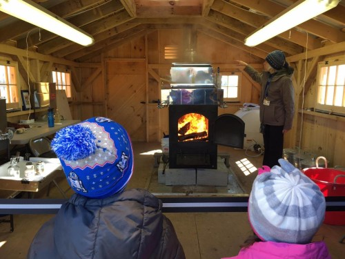 Duke Farms: Maple Sugar Celebration