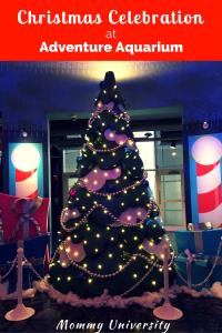Adventure Aquarium Christmas Celebration