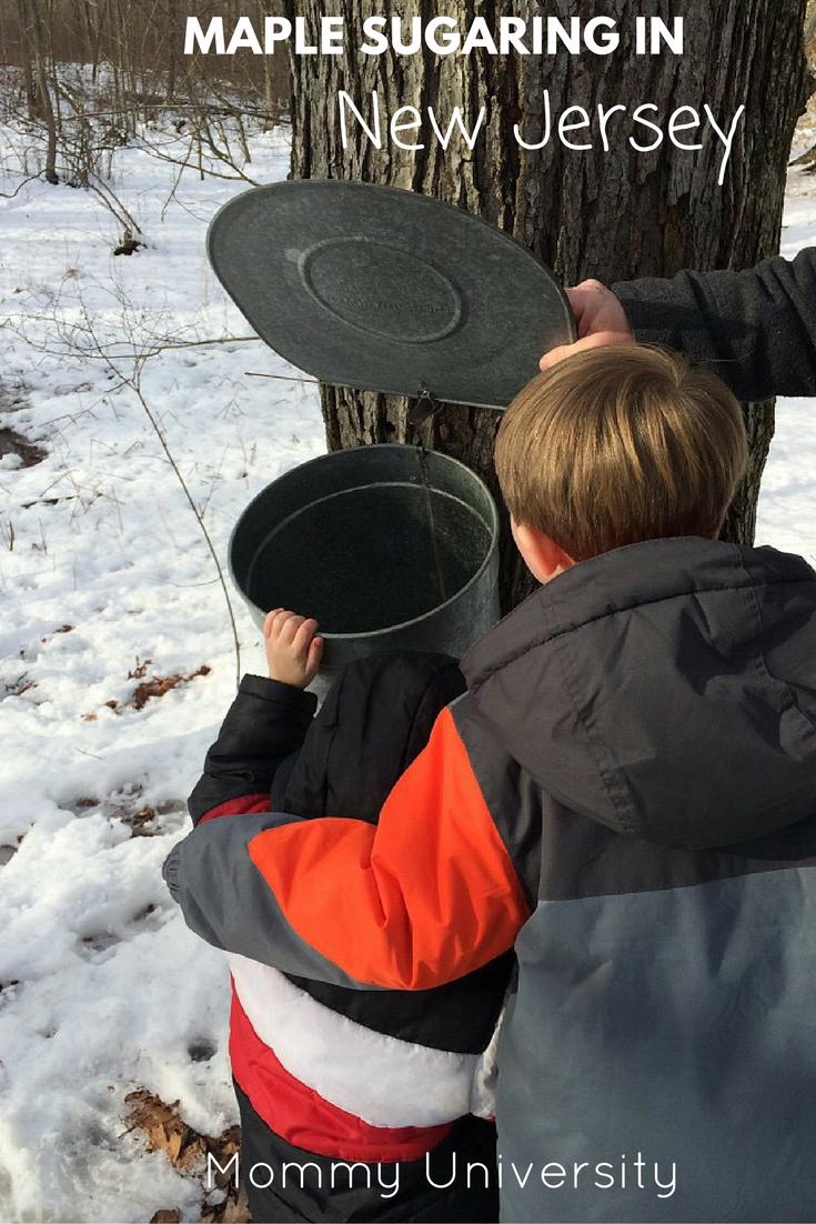 maple-sugaring-in-nj