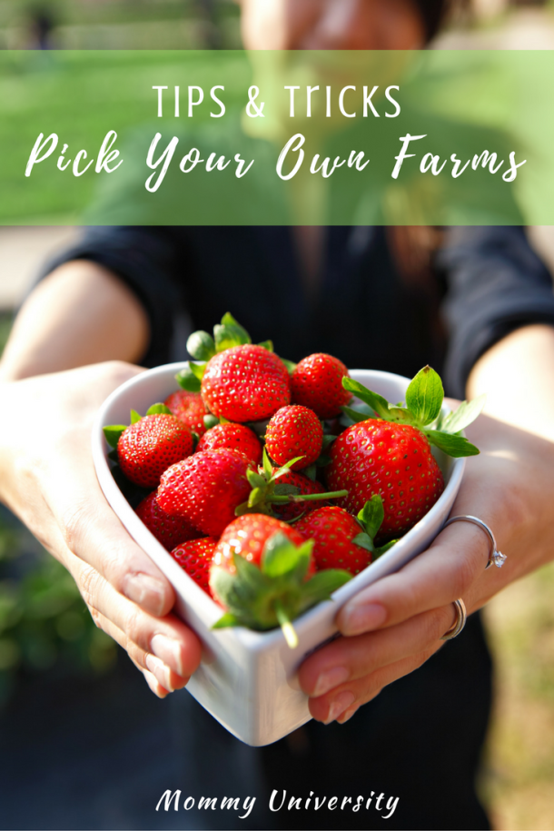 Tips to Pick Your Own Farms
