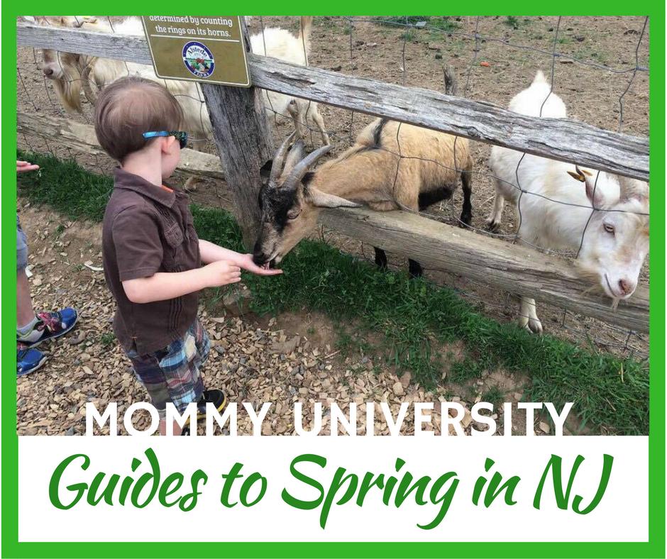 spring guides sidebar
