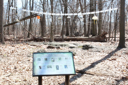 Backyard Birds at Tenafly Nature Center