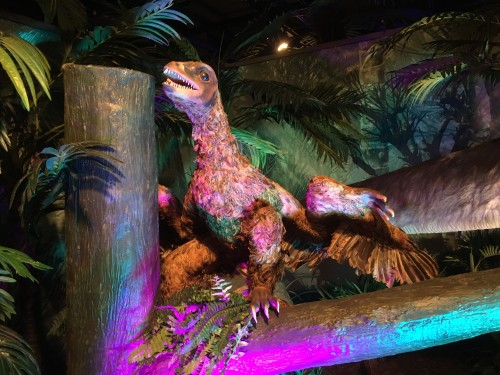 Microraptor Dinosaur