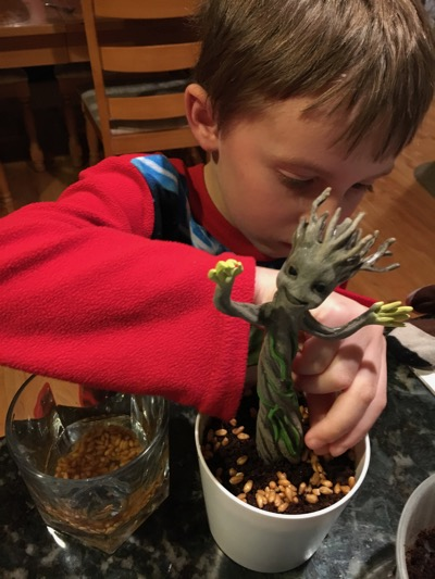 Plant Groot seeds