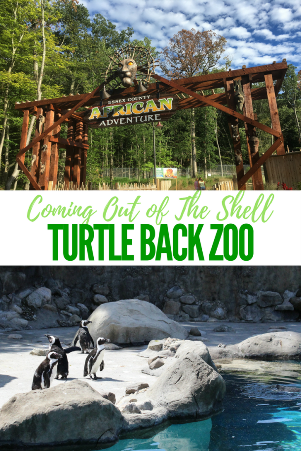 Turtle back zoo is coming out of the shell mommy university turtle back zoo publicscrutiny Choice Image