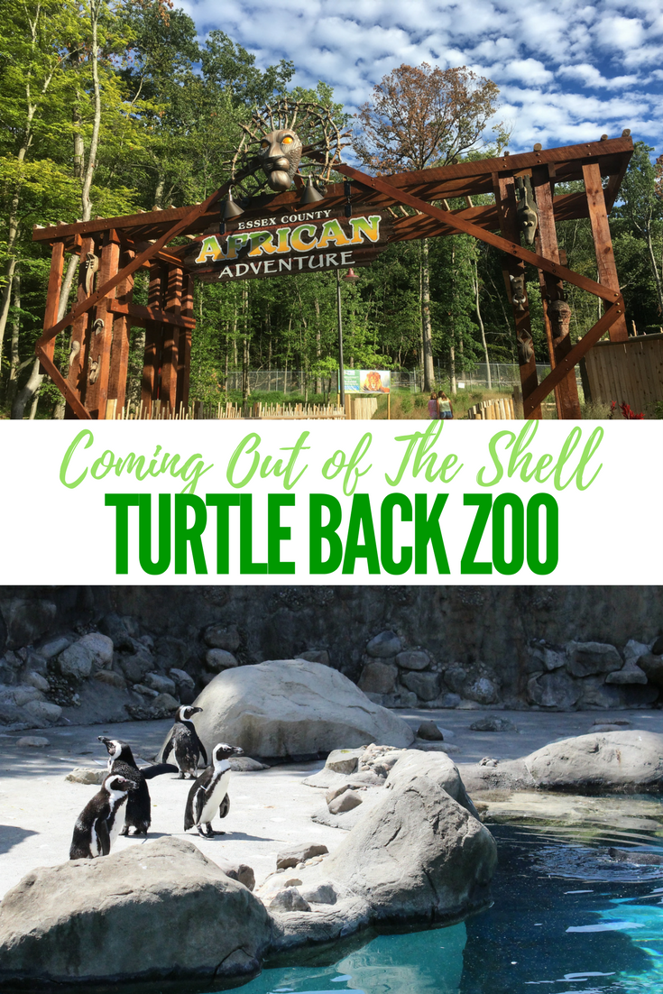 Turtle Back Zoo Christmas Lights 2019.Turtle Back Zoo Is Coming Out Of The Shell Mommy University