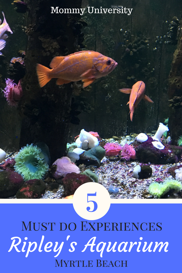 5 Must Do Experiences at Ripley's Aquarium Myrtle Beach