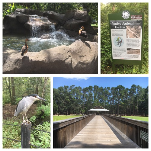 Native Wildlife Zoo at Brookgreen Gardens