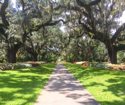 Live Oak Allee in Brookgreen Gardens
