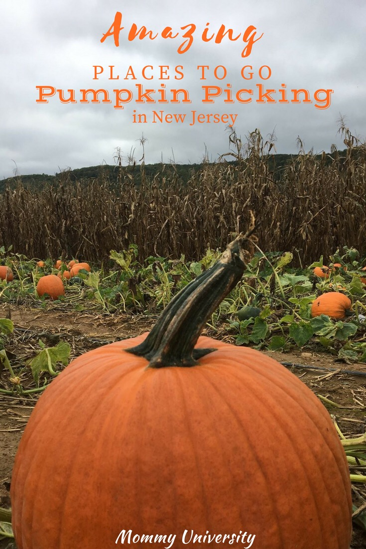Amazing Places to Go Pumpkin Picking in NJ