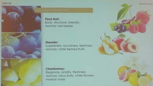Grape Variety at Champagne Tasting