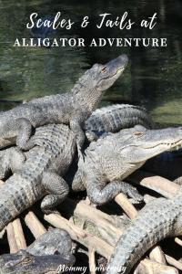 Alligator Adventure in Myrtle Beach