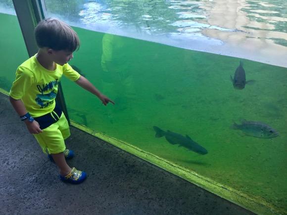 Fish at ZooAmerica