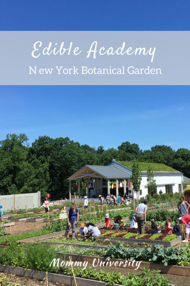 Edible Academy at New York Botanical Gardens